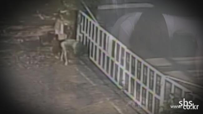 SBS [TV 동물농장] 두 얼굴의 개(犬) 도둑