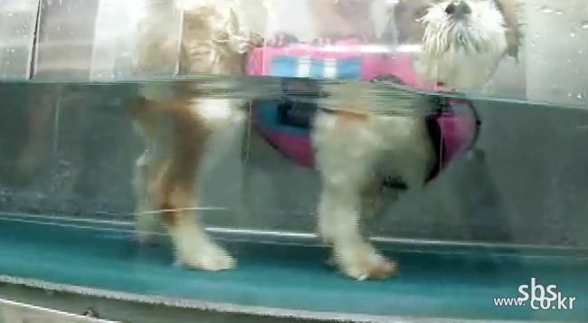 SBS 400회 특집 [TV동물 농장](HDTV)  - 머리 돌아간 강아지 침 맞고 머리 제자리에...