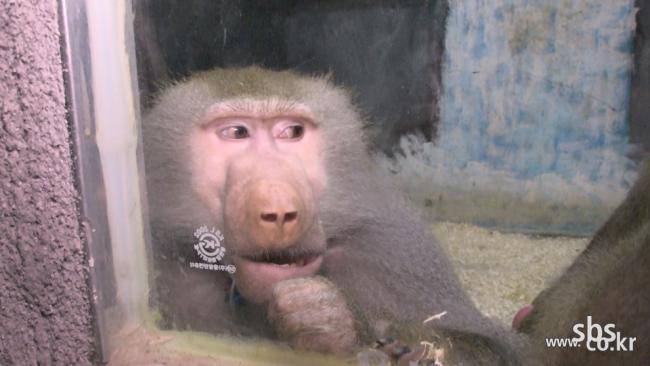 SBS [TV 동물농장] 뜨거운 자동차 보닛 속에서 가까스로 살아난 강아지 미스터리